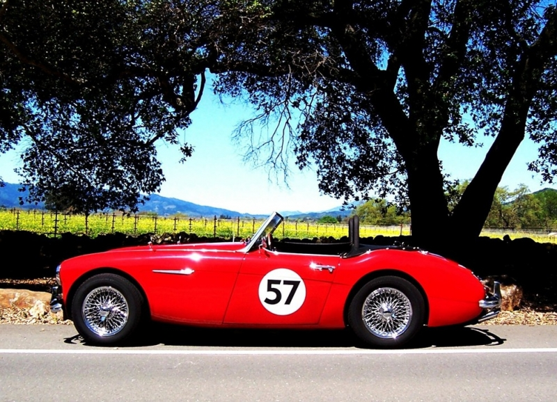 Erika_the_Red_in_the_Napa_Valley_wine_country_-_Small_size